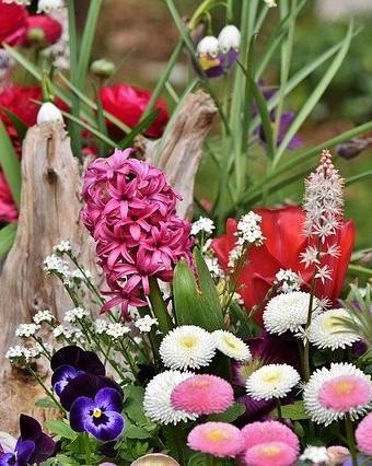 verschillende bloemen en een stuk hout