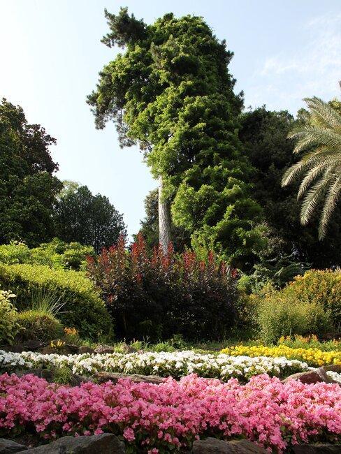 border tuin met bomen en planten en bloemen