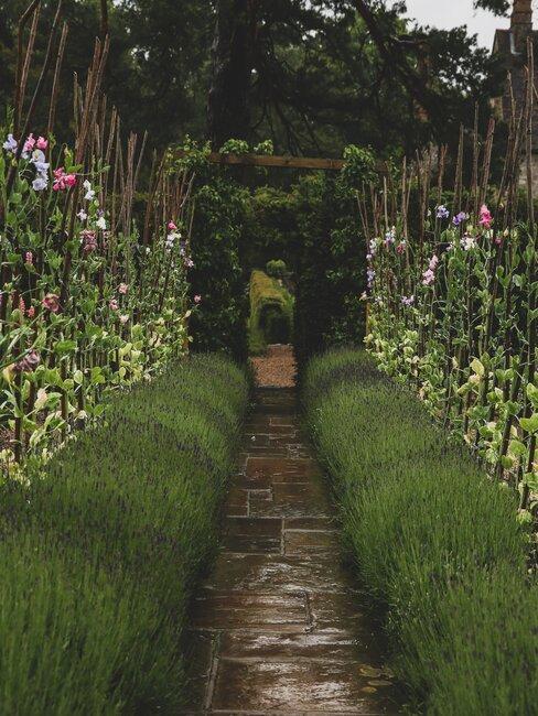 groene planten borders langss een pad