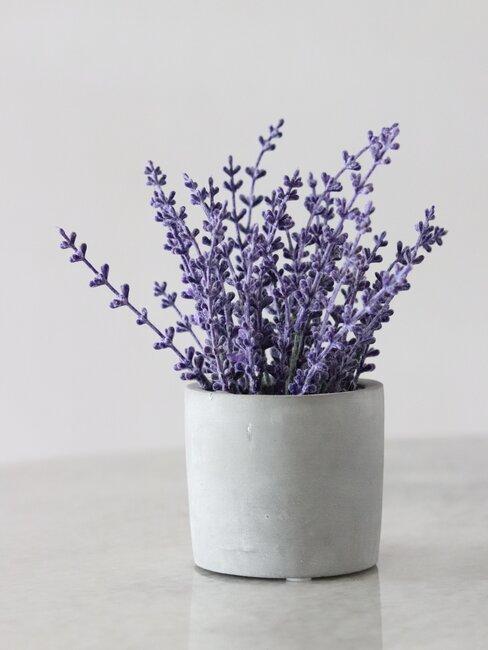 witte pot met lavendel
