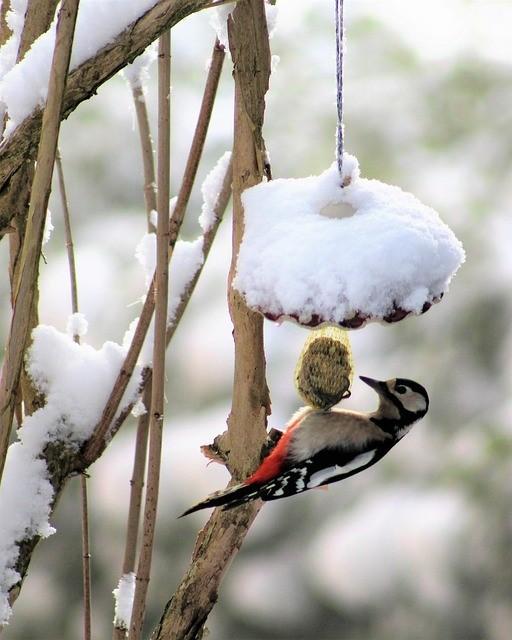 vogeltje eet van vogelvoer in een wintertuin