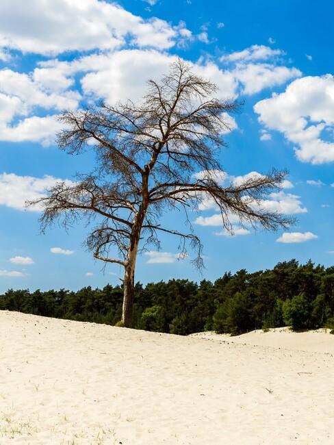 boom op een strand