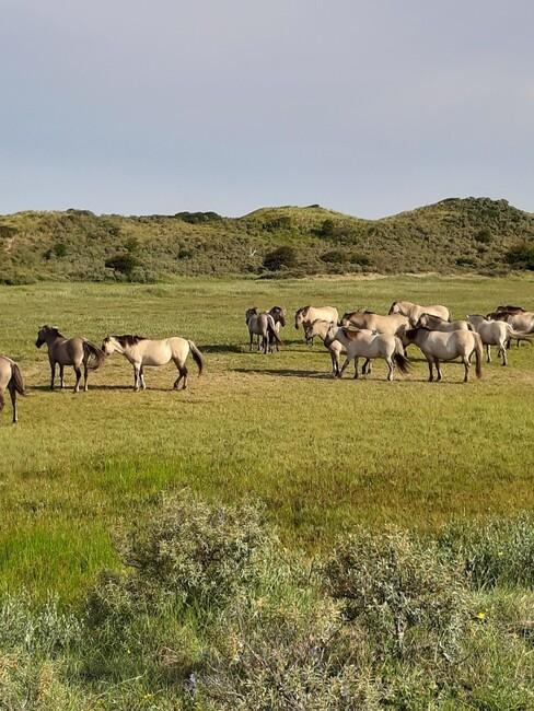 Paarden op heuvels