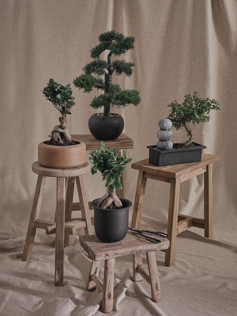 bonsai boompjes