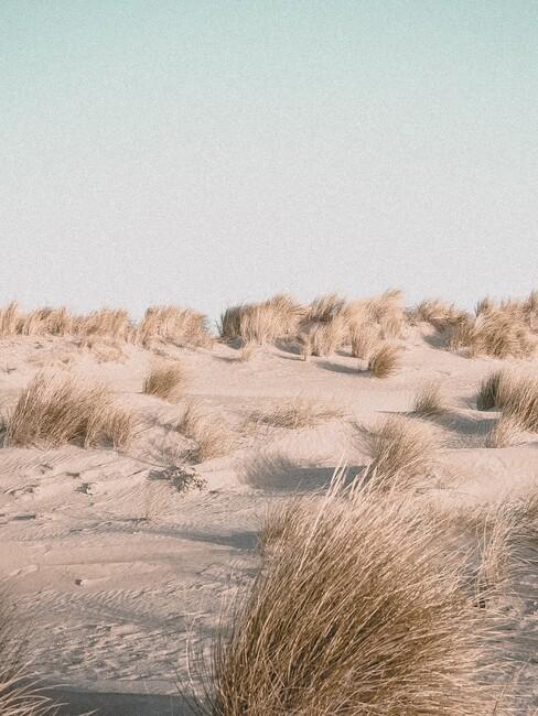 Nederlandse stranden: de duinen