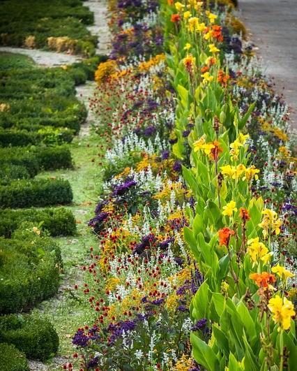 bloembed met verschillende kleuren bloemen