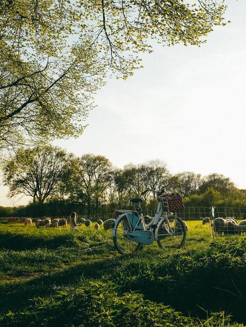 blauwe fiets in een weiland