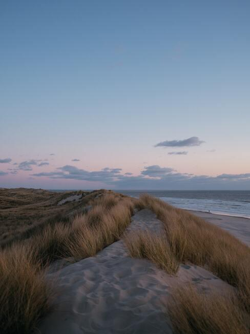 natuurgebied in de duinen
