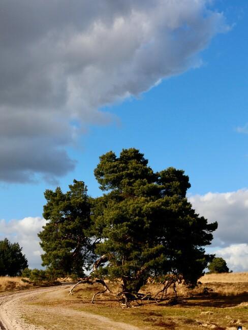 grote boom op een veld