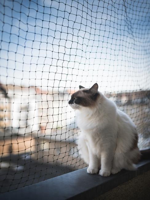 kat voor kattennet op balkon