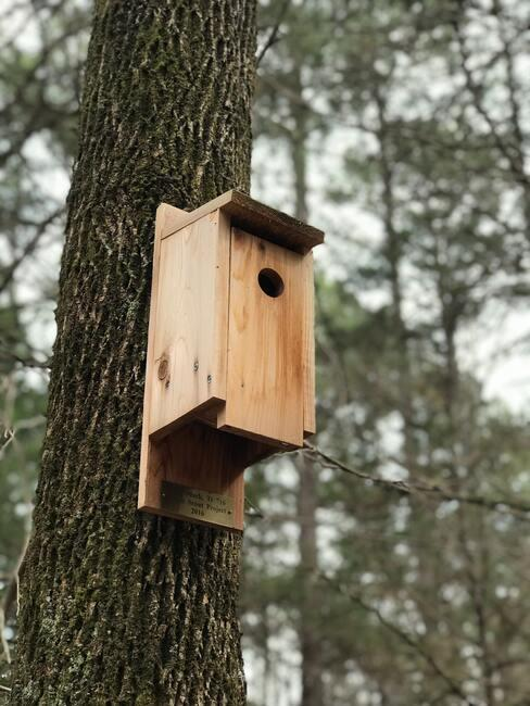 houten huisje aan een boom