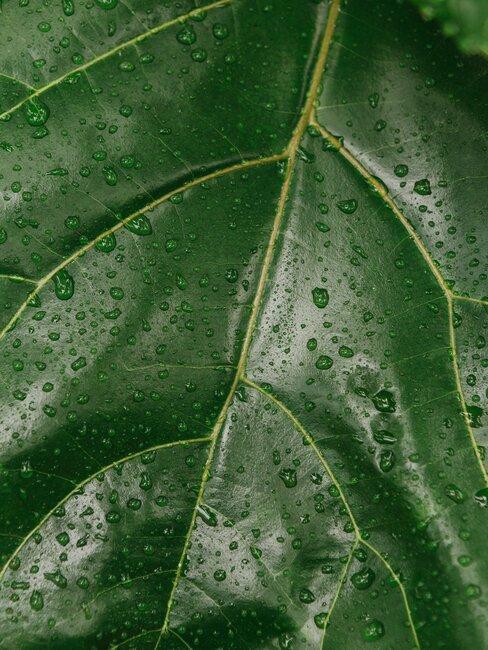 blad met water