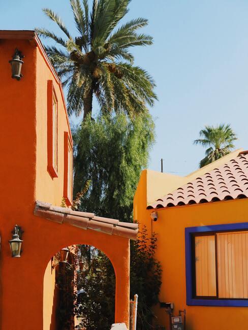 oranje huizen met een palmboom