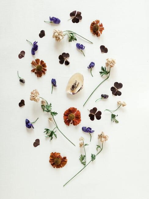 verschillende gekleurde bloemblaadjes