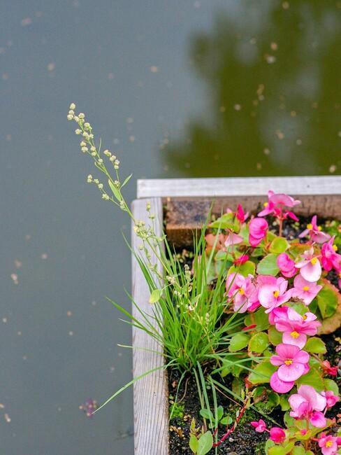 houten plantenbak met gekleurde bloemen