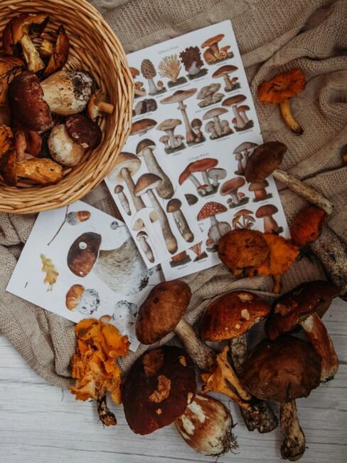 champignons in een mand en als stickervel