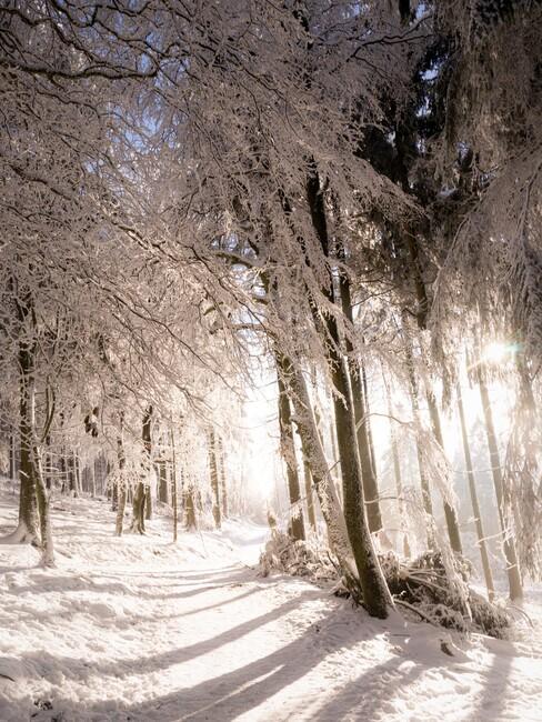 kerst-ideeen een winterwandeling in de sneeuw door het bos