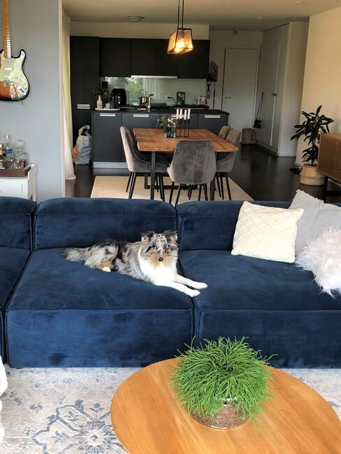 Woonkamer met blauwe sofa en hond die op de bank ligt