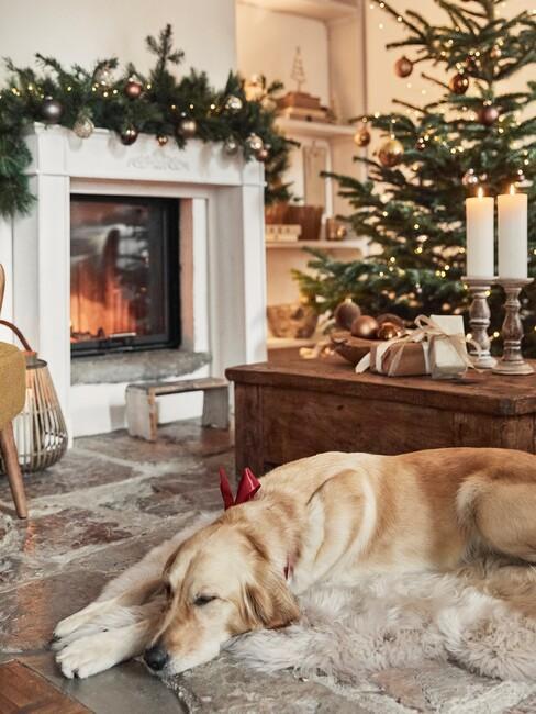 Hond bij openhaard en kerstboom