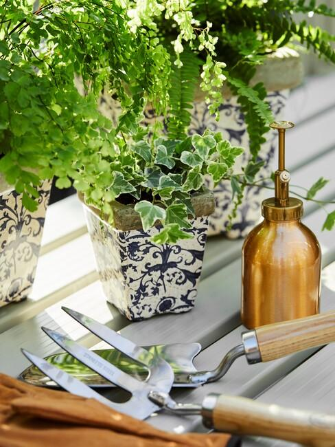 Plantenpotten met planten