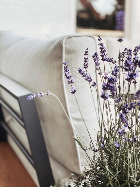 Biała sofa w salonie obok której stoi lawenda