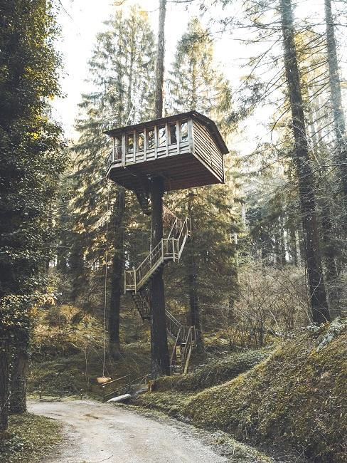 Domek na drzewie obok ścieżki w lesie