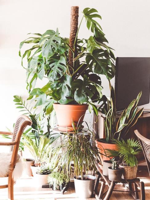 Pomieszczenie z roślinami