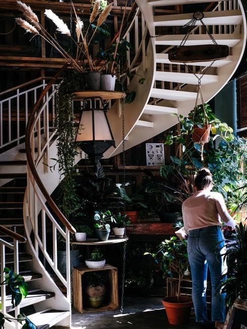 Wnętrze domu z kręconymi schodami z dużą ilością roślin