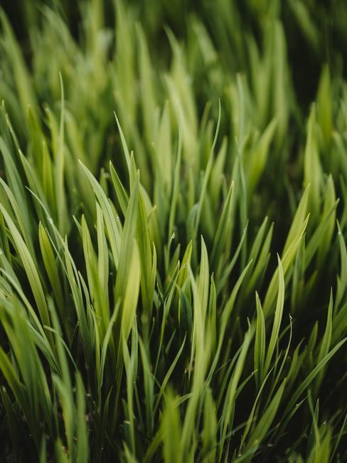Zbliżenie na trawę