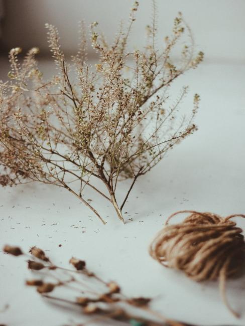 Zbliżenie na suszone kwiaty