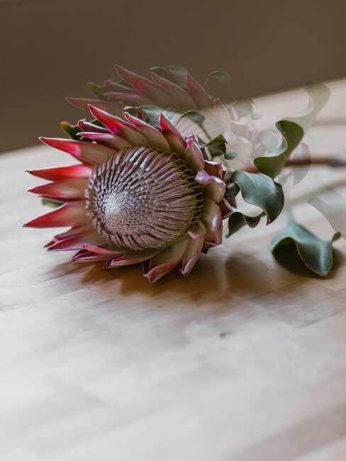 Kwiat protei ułożony na drewnianym stole