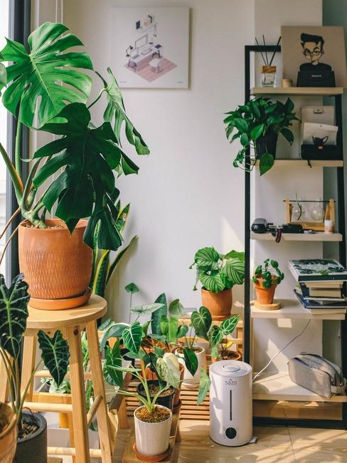 kącik rośliny w mieszkaniu ustawiony obok drewniano-metalowej półki