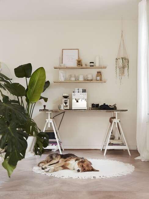 zbliżenie na domowe biuro z biurkiem, półkami oraz roślinami w doniczce