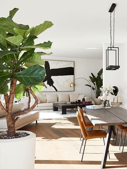 Salon wypełniony światłem w neutralnych kolorach i dużym drzewem fikusa