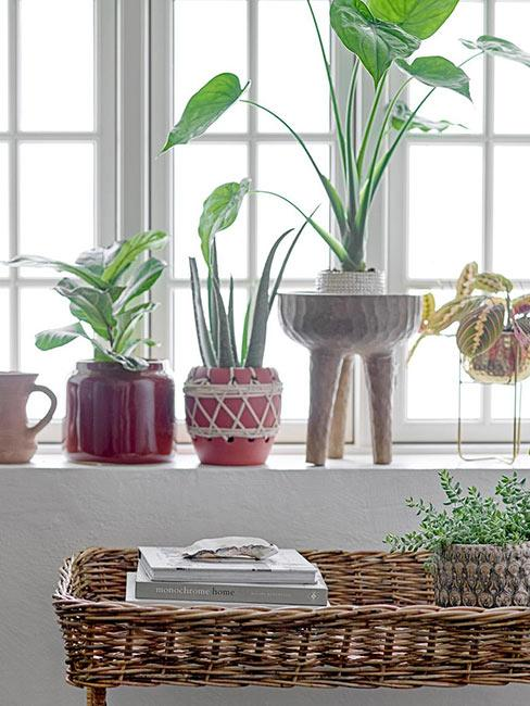 Rośliny w kolorowych ceramicznych doniczkach na parapecie nad stolikiem z wikliny