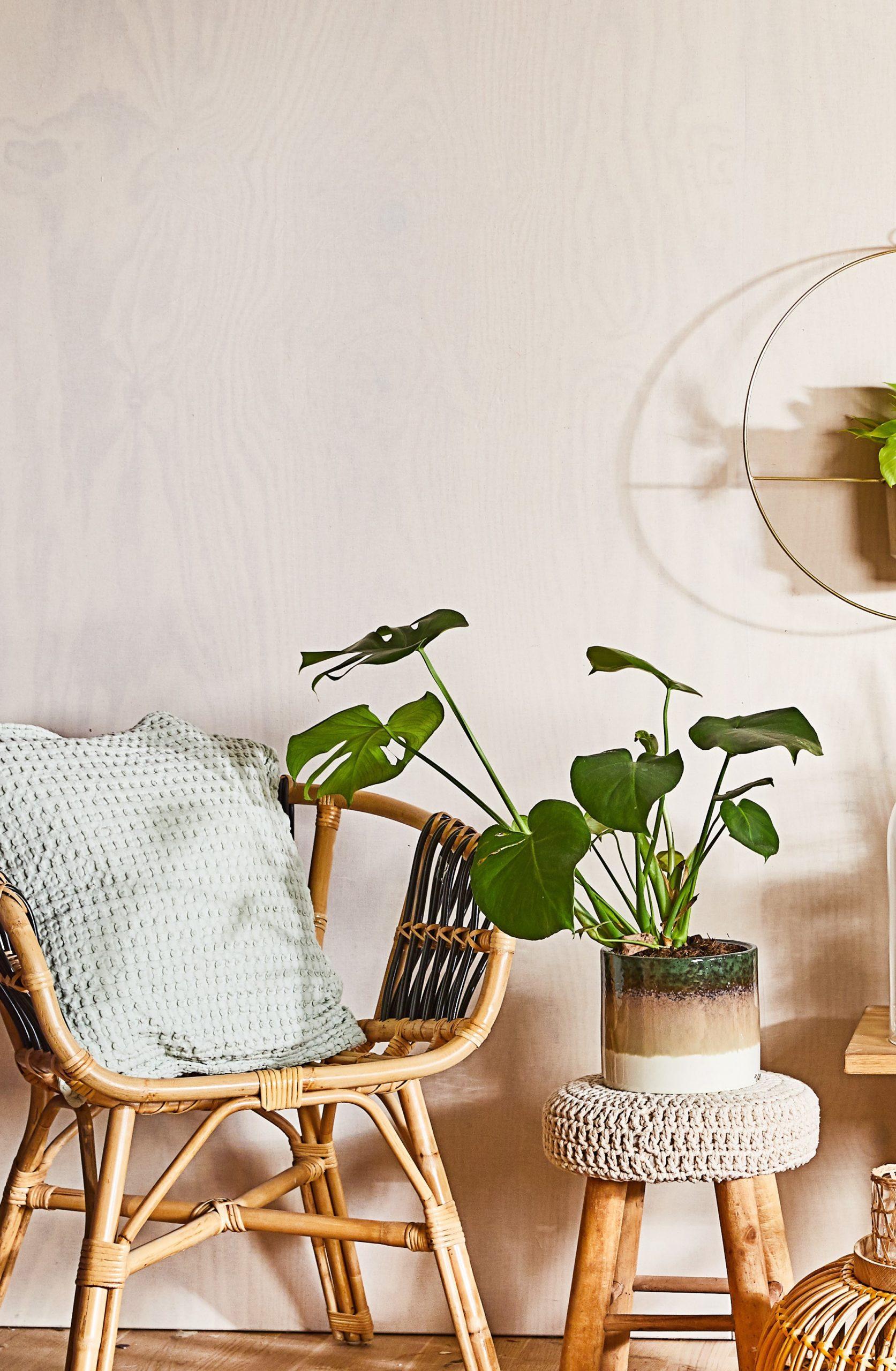 Białe wnętrze z rattanowym krzesłem z poduszką, stoliczek z monsterą deliciosą oraz dekoracją ściannę z rośliną