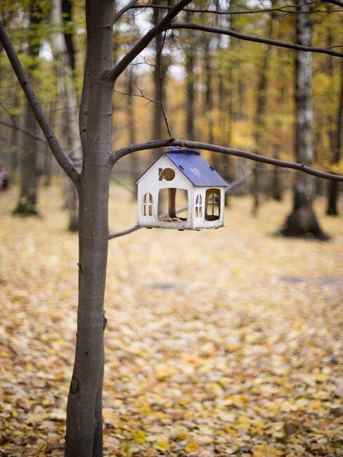 karmnik dla ptaków DIY w lesie