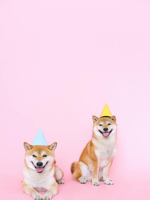Pieski w kolorowych czapeczkach imprezowych