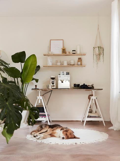 Domowe biuro w odcieniu beżowu, drewnianym biurkiem, półkami, białym dywanem oraz dużą rośliną w doniczce