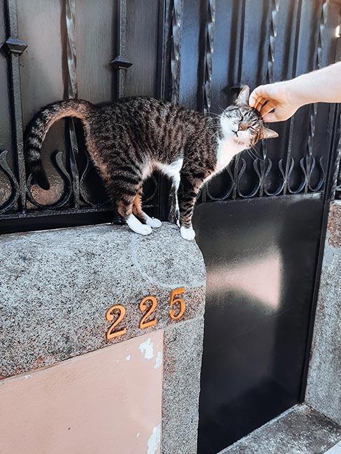 dłoń głaskająca kota na ulicy w Lizbonie
