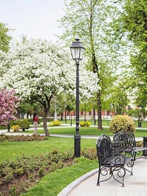kwitnąca jabłoń w Hermitage Garden w Moskwie