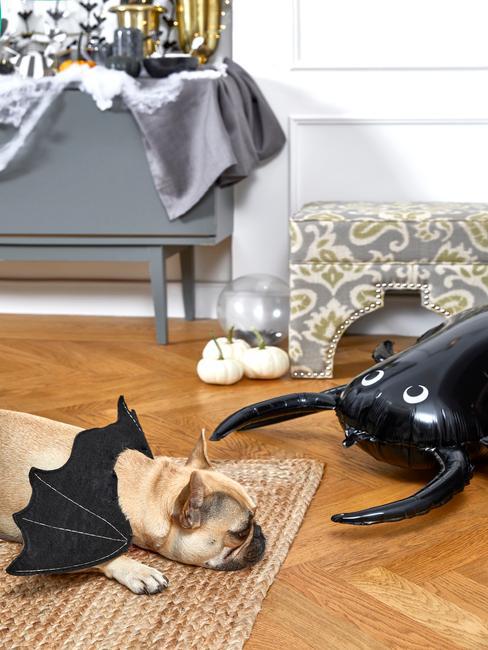 Pies przebrany za nietoperza obok czarnego balonika