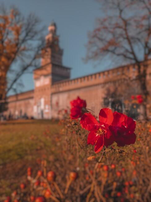 Zamek Sforzów