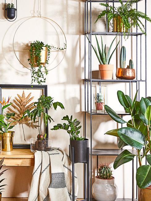 Mnóstwo roślin na regałach, w wiszących wazonach