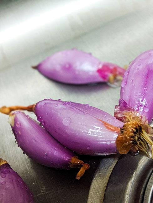 fioletowa cebula