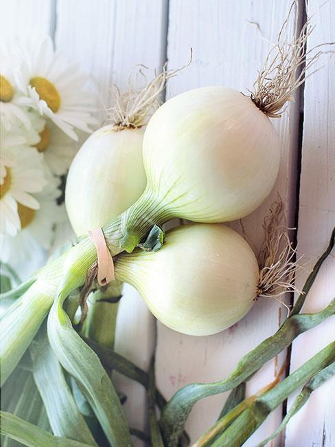 pęczek białek cebuli dymki z natką szczypioru na białym blacie