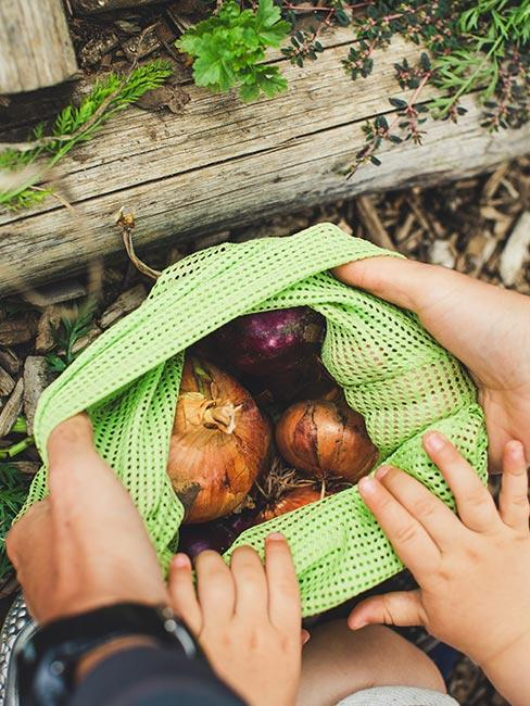 Ręce wyjmujące cebulę z worka