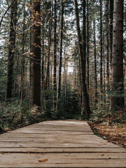 Drewniana dróżka w lesie