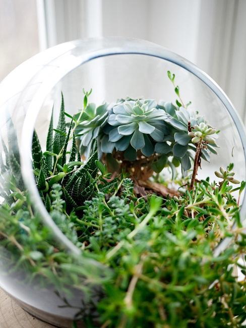 Okrągłe terrarium roślinne z dużą ilością zielonych roślin