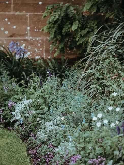 Krzewy ziół w ogrodzie pod ścianą